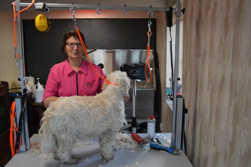Tibetaanse terriër die mooi in model gemaakt wordt, dit doe ik graag omdat ik van honden en anderen dieren houd. Een dierenliefhebber in hart en nieren.