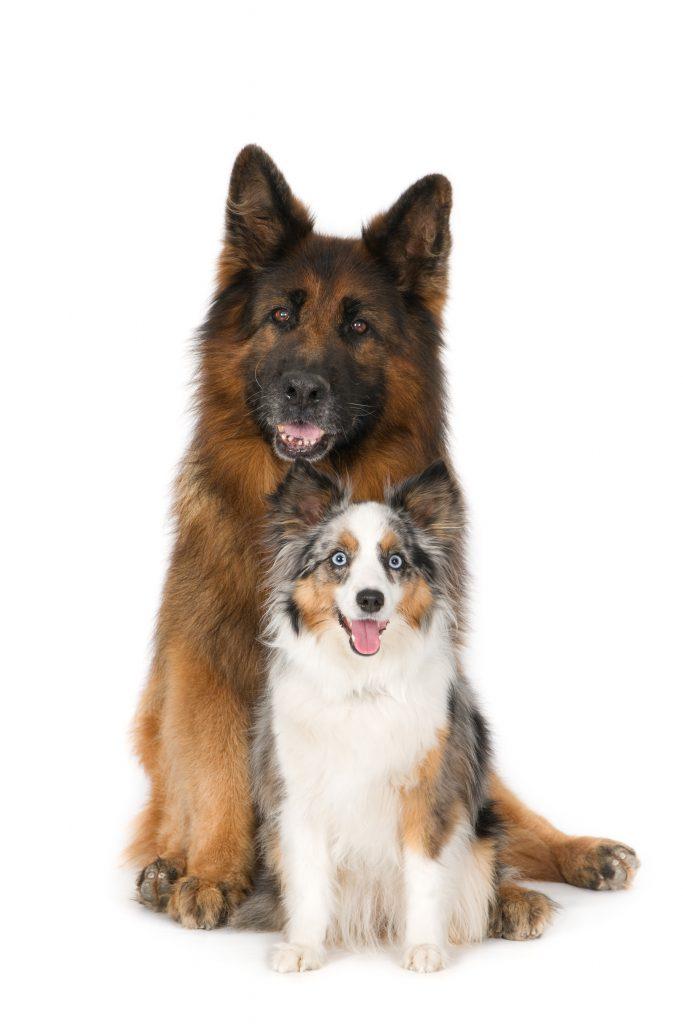 Mijn honden Jindy en Gabber in het mooie Beemster. bij hondentrimsalon Beemster vlakbij Purmerend, Oosthuizen, de Rijp, middenbeemster, warder, avenhorn, schermer, hoorn, alkmaar, heerhugowaard, hobrede